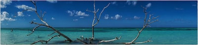 dilian-markov-sony-alpha-7II-idyllic-beach-in-cuba-showing-tree-branches-sticking-out-of-water