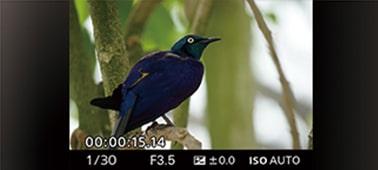 Снимка на Фотоапарат α7 II с байонет Е и пълноформатен сензор