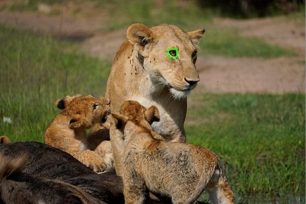 AF върху очи в реално време за животни